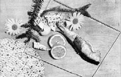 Peterhans_Walter_Bauhaus_Still_Life_with_Fish_and_Lemon_Slices_c1930