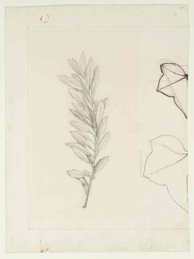 Ruskin_John_An_Olive_Spray_and_Two_Leaf_Outlines_1877